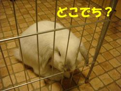 2008-10-17 006a.jpg
