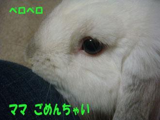 2008-12-21 029a.jpg