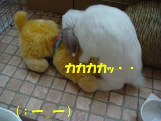 2009-02-16 041a.jpg
