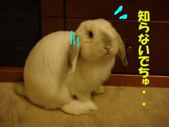 2009-04-10 002a.jpg