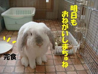 2009-04-13 039a.jpg