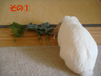 2009-06-09 017a.jpg