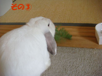 2009-06-09 033a.jpg