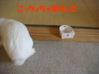 2009-06-09 037a.jpg
