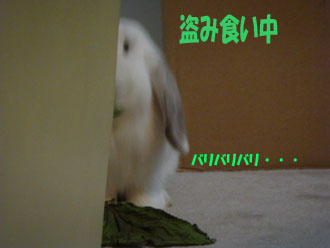2009-06-1 015a.jpg