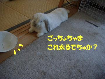2009-07-17 010a.jpg