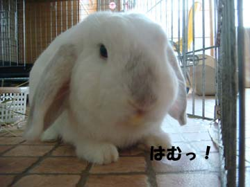 2009-08-12 015a.jpg